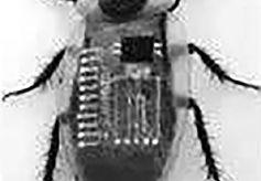 人造神经来了机器人有一天也会喊疼